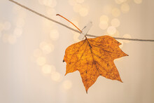 Maple Leaf Drying On Clothesline