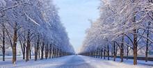 Germany, Hanover, Herrenhaeuser Gaerten, Snow-covered Alley In Winter