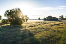 Germany, Brandenburg, Drone View Of Vast Poppy Field At Springtime Sunrise