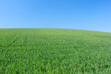 Spain, Andalusia, View To Green Wheat Field In Front Of Blue Sky