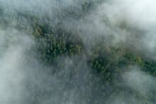 Germany, Bavaria, Franconia, Aerial View Of Forest Covered With Fog At Morning