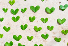 Green Heart Shaped Leaves On Cement