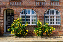 Germany, Schleswig-Holstein, Husum, Yellow Roses Blooming In Front Of Brick House