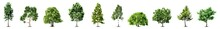 Set Of Trees Isolated On White Background. Vector. Set Of Trees Object Isolated On White Background Vector Illustration. Leaf, Nature, Background, Forest, Plant, Tree, Growth.