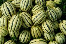 Heap Of Fresh Green Pumpkins