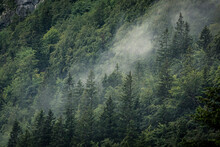 Fog Rising Above Forest