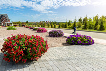Beautiful Flowerbed With Blossoming Bright Red Petunia Flowers Along Green Cobble Paved Pavement Road At City Street Park Garden Against Blue Sky On Sunny Day. Landscaping Design And Plant Decoration