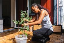 Black Woman Planting Flower In Flowerpot
