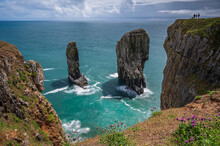 Elegug Stacks, Pembrokeshire, South Wales.  The Stacks Are A Unique Geological Formation That Can Be Seem From The Wales Coastal Path.