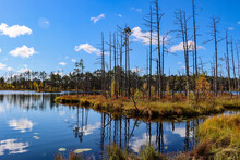 Swamp Landscape With Dead Trees And Lake
