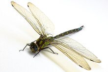 Dragonfly Is A Very Good Flying Predatory Insect