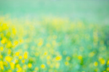 Abstract Blurred Background. Unfocused Bokeh Yellow Meadow Flowers. Summer And Spring Flower Backdrop