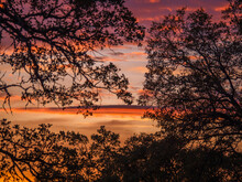 Silhouetted Oak Trees Against Sunset Sky. Falcons Crest Folsom Lake State Recreation Area