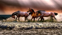 Horses In The Field