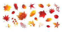 Set Of Watercolor Autumn Leaves On White Background Vector Illustration