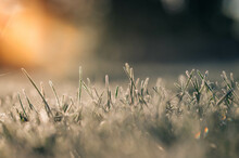 Green Grass With Morning Frost And Sunlight In Garden. Frozen Grass On Meadow At Sunrise, Plants For Abstract Natural Background. Spring Or Autumn Hoarfrost.