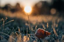 Frozen Leaves On A Winter Grass Ground Landscape