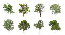 Set Of Isolated Trees On White Background , The Collection Of Trees