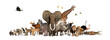 canvas print picture - Large group of African fauna, safari wildlife animals together, in a row, isolated