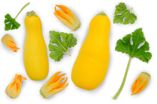 Yellow Zucchini With Flowers And Leaves