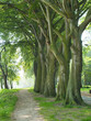 drzewa park