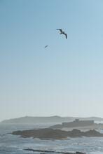Seagulls Flying Over Coastline