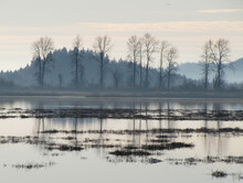 Pitt River Marshes Lake At The Dusk