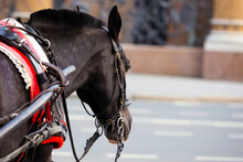 Traditional Horse-drawn Fiaker Carriage. Harnessed Bay Horse On A City Street