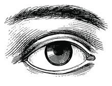 Vintage Style Eye Vector