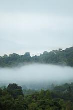 Tree Line Through Fog
