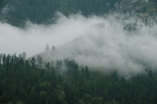 Fog Floats Over Coniferous Trees And Cliffs In The Altai Mountains