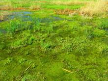 秋の朝の湿地風景