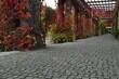 jesień, ogród, park, klon palmowy, ogród japoński