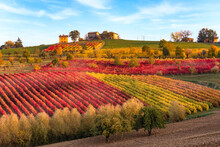 Vineyards And Autumn Landscape, Rolling Hills And Fall Colors