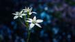 Biały kwiat na niebieskim tle
