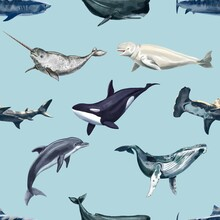 Watercolor Whales Seamless Pattern. Dolphins, Orca, Narval, Beluga, Whales And Shark