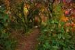 Piękna, polska jesień. Magiczne miejsce, czekające na zbliżającą się zimę, które lubi odwiedzać młody biały kot albinos