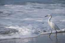 Snowy Egret On The Beach