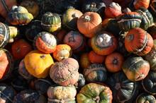 Pumpkins And Gourds