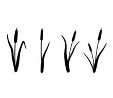 Reed Silhouette Set. Vector Illustration Isolated On White Background. Plants On The Swamp And River.