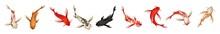 Koi Fish & Waterlily Background. Oriental Pattern With Rainbow Carps. Set Of Koi Carps, Japanese Fish On White Background. Colored Korean Animals. Sea Creature. Engraved Hand Drawn.