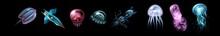 Hand Drawn Sketch Isolated Jellyfish, Marine Animals - Stock Vector Illustration. Jellyfish, Abstract Graphic Illustration Of Jellyfish In Vector. Water, Underwater, Illustration, Animal, Jellyfish