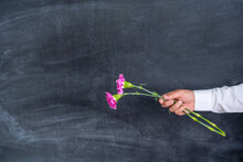 Two Pink Carnations In A Man's Hand On The Background Of A Chalk Board