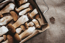 Boletus Edulis, Porcini - Forest Mushrooms Drying. Sliced Mushrooms On A Baking Sheet, Linen Mesh Background. Gourmet Food Kitchen.