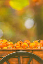 Old Wooden Cart With Pumpkins In Front Of A Colrful Forest Background In Autumn