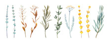 Watercolor Hand Painted Botanical Fall Herbs Leaves And Branches Illustration Isolated On White Background