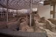 amfiteatr rzymski ruiny kamień zaragoza zabytek