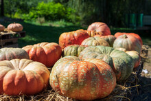 Large Orange Pumpkins For Sale At Farmers Market In Fall