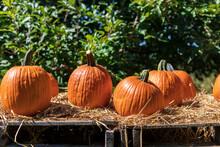 Orange Pumpkins Sit On Hay Covered Pallets In Autumn