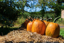 Pumpkins On A Hay Covered Table At A Farm At Halloween